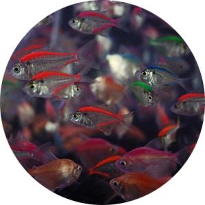 Fish_round